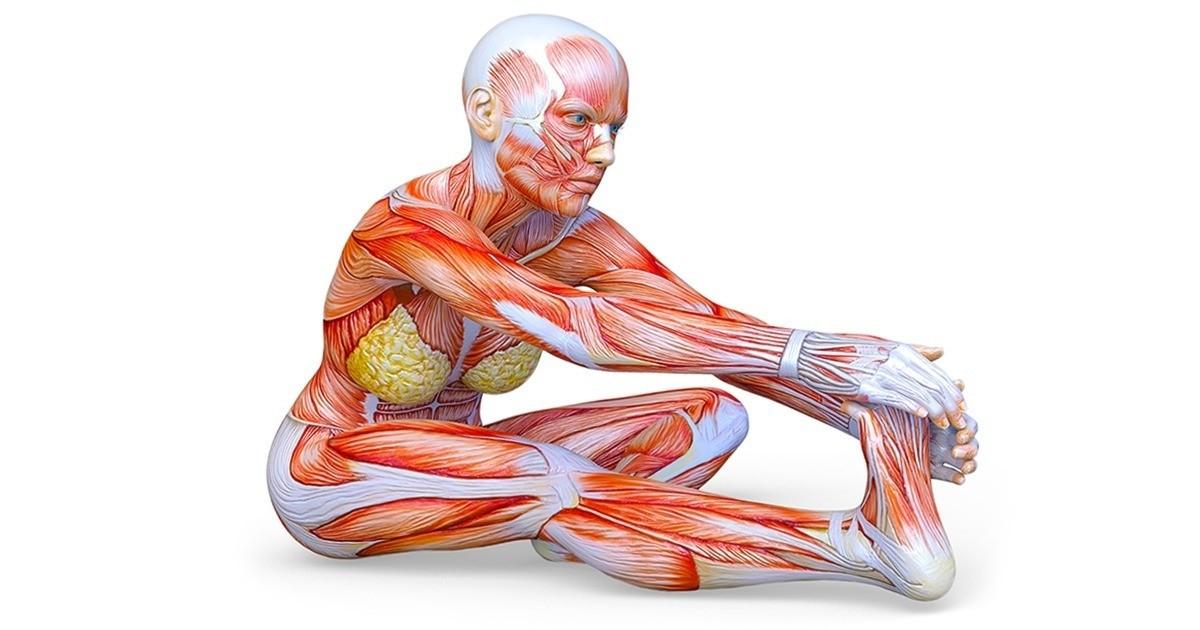 Can Stretching Help Attain a Better Posture Change - Blue tree clinics, Dubai