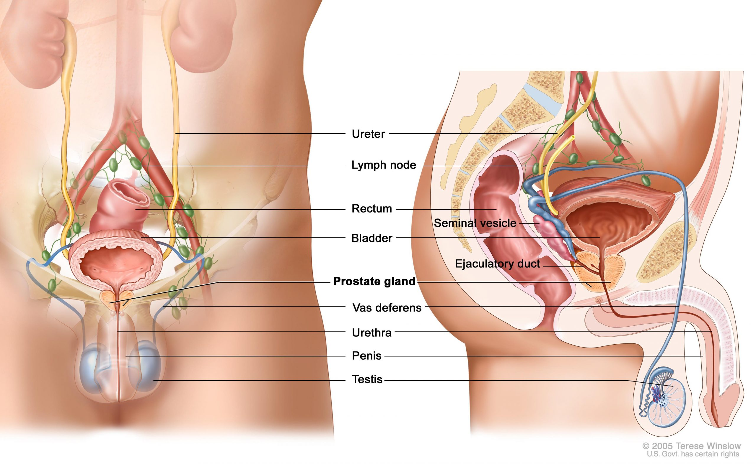 Incredible Benefits Of Physiotherapy for Prostate Cancer Patient - Blue Tree Clinics Dubai
